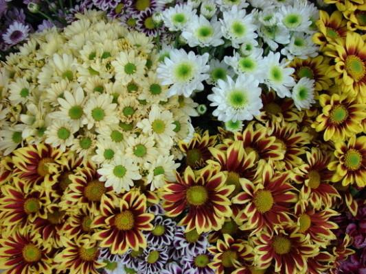 가을 꽃 | 블로그