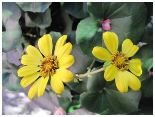 겨울 꽃 | 블로그
