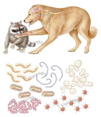 (강아지질병)#6.광견병/공수병 | 블로그