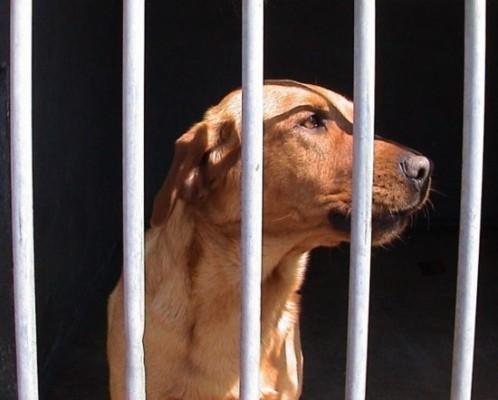 공수병 증상 [성남분당 동물병원] | 블로그