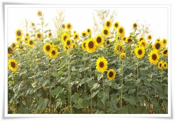 태양의 꽃 아름다운 빛 이만희 총회장님~♥ | 블로그