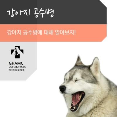 강아지 공수병  | 블로그