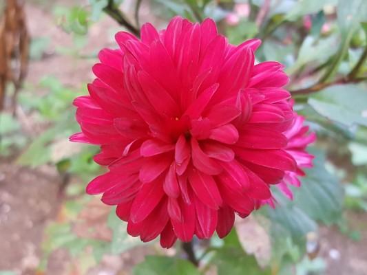가을꽃 이야기   블로그