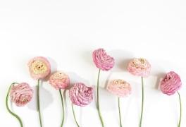 성격은 '라넌큘러스'라네요 (꽃 MBTI 검사, 일명 '꽃 테스트...