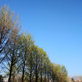 [월요 일기]2021.4.5서울 날씨 10°C(주간예보)(2021년 한식날-식목일)