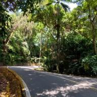 코타키나발루 다시 락다운😪 집근처 시그널힐 전망대 가는길 운동 겸 산책하기