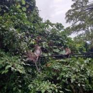 코타키나발루 생활, 시그널힐 산책 걷기 중 만난 야생 원숭이 패밀리