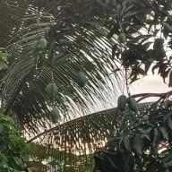 코타키나발루 길거리에서 흔히 보이는 과일들