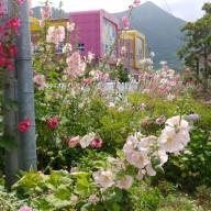 꽃피고 열매 맺히는 풍경