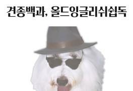 [견종백과] 올드잉글리쉬쉽독 (=필스타 필성, 지붕 뚫고 하이킥...