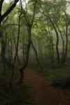 [ 제주도 어디까지 가봤니 ? ] 몽환의 숲, 안개 낀 사려니숲길