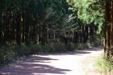 6월 7월 제주도 가족여행 힐링여행 가볼만한곳 사려니숲길 휴애리