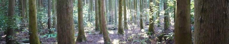 [제주도 여행] 사려니숲길
