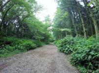 제주도 사려니숲길 힐링하기 좋은곳!