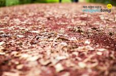 제주 사려니숲길 :: 제주도 힐링코스 피톤치드가 가득한 숲길