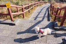제주도 산방산, 고양이와 서귀포 관광지 나들이 :)