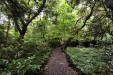 산림욕하기 좋은 제주도 비자림 소요시간 및 리뷰