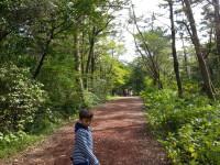 제주도 사려니숲길 및 제주절물자연휴양림