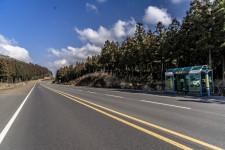 제주도 힐링여행은 #사려니숲길