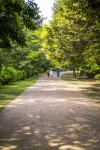 제주도 비자림. 그곳은 천년묵은 비자나무가 살고 있다.