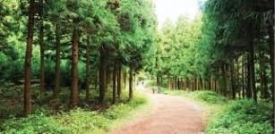 제주도 비자림 산림욕 매력에 빠져보세요