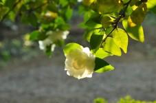 제주도 가볼만한 곳- 여미지 식물원, 에코랜드, 카멜리아 힐 자연 속 힐링:)