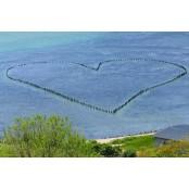 250년 전 애절한 바다이야기2 사랑 이야기…청산도 바다에 바다이야기2