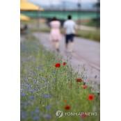 꽃양귀비와 연인