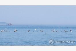 미역·파래 양식어가도 코로나19 극복 100만원 바우처 받는다
