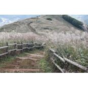 억새 숲이 익어가는 정선카지노가는길 민둥산의 풍경을 엽서에 정선카지노가는길 담다
