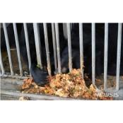 """""""국내 사육곰 479마리…음식물찌꺼기 먹이기도"""""""