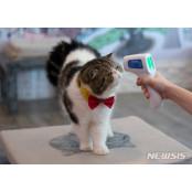 고양이 치료제, 코로나19 19애니 바이러스 복제 차단…FDA에 19애니 임상 신청