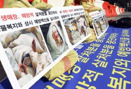닭 퍼포먼스하는 한국
