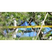 n번방도…전주 살인사건도… 범죄로 랜챗 연결되는