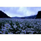 꽃으로 치장한 슬로프…예술 덧칠한 폐광… 정선카지노주소 정선 여름옷을 입다