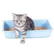 '맛동산' 만드는 고양이의 속사정