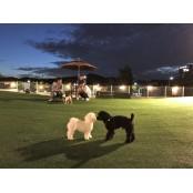 사람과 개가 모이는 곳…반려견 놀이터의 놀이터추천좀 하루