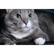 고양이도 제 이름 알아듣는다