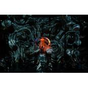 음악에 빛 융합 퍼포먼스…재창조된 하이든의 '천지창조'