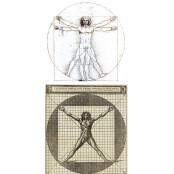 (22)예술·과학 꿰뚫는 '다빈치 코드'는 인체의 인터넷다빈치 비례였다 [서양고전학자 김동훈의 물질인문학]