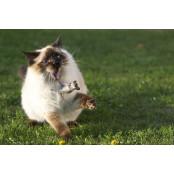 """이번엔 고양이 복막염 19애니 치료제? """"코로나19 치료에 19애니 효과"""" 연구 결과 19애니"""