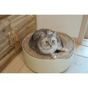 [맞춤형 결혼] 리트리버와 고양이 3마리의 마리와나 고양이 동거, 가장 큰 변화