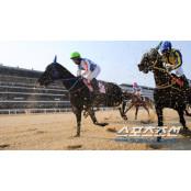 6월 경마시행계획 발표, 9월12일토요경마 19일 스포츠조선배 개최 9월12일토요경마