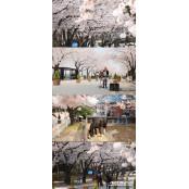 [경마]말, 사랑, 벚꽃 말고…한국마사회