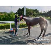 [경마] 한국마사회, 말들의 여름나기를 위한 서울경마 체계 완비했다