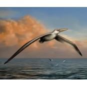 날개길이 7m '세계 최대 새'는 7m데이터 어떻게 날았을까?