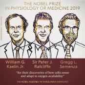 올해 노벨생리의학상은 '산소 성의학연구소 호흡 원리' 규명한 성의학연구소 英-美 과학자들 품으로 성의학연구소