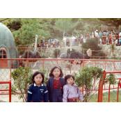 옛 사진으로 보는 그 시절 치마사진 부산의 동물원