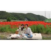 하동 북천 꽃 양귀비,유튜브로 만나요
