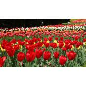주말나들이·축제·공연·전시·5일장 정보(4월 6·7·8일) 9월12일토요경마